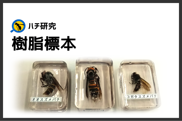 FRPを利用した「スズメバチ」の樹脂標本の作り方